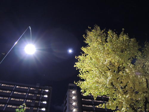 ニコンP310、夜間の撮影、月とイチョウが黄色くなってきれいだったので